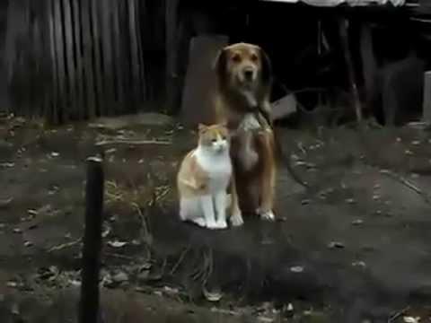 Cat Hugging Dog Very Cute Youtube