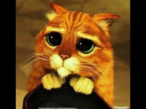 ну пожалуйста покажи сиськи фото котенка