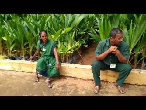 lalbagh bangalore nursery