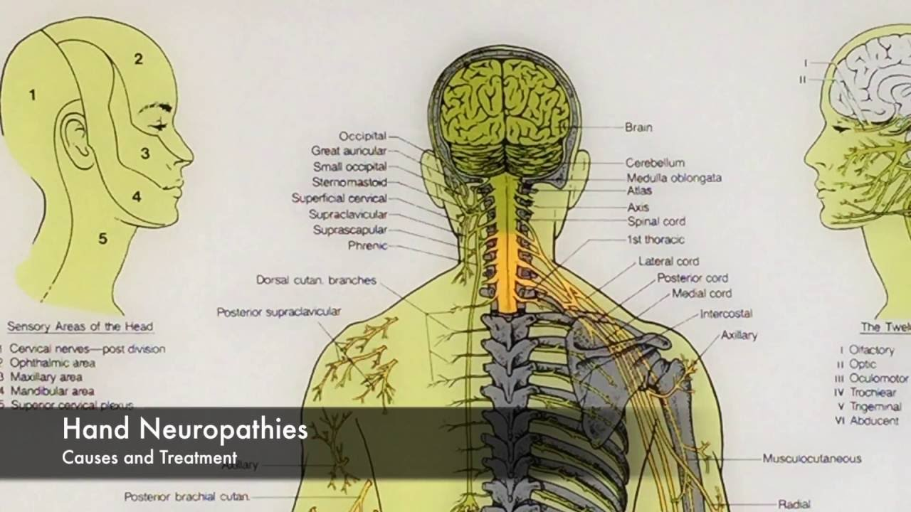 Neuropathy Tingling, Numbness, Pain-Causes and Treatment Euclid  Chiropractic Upland Cucamonga