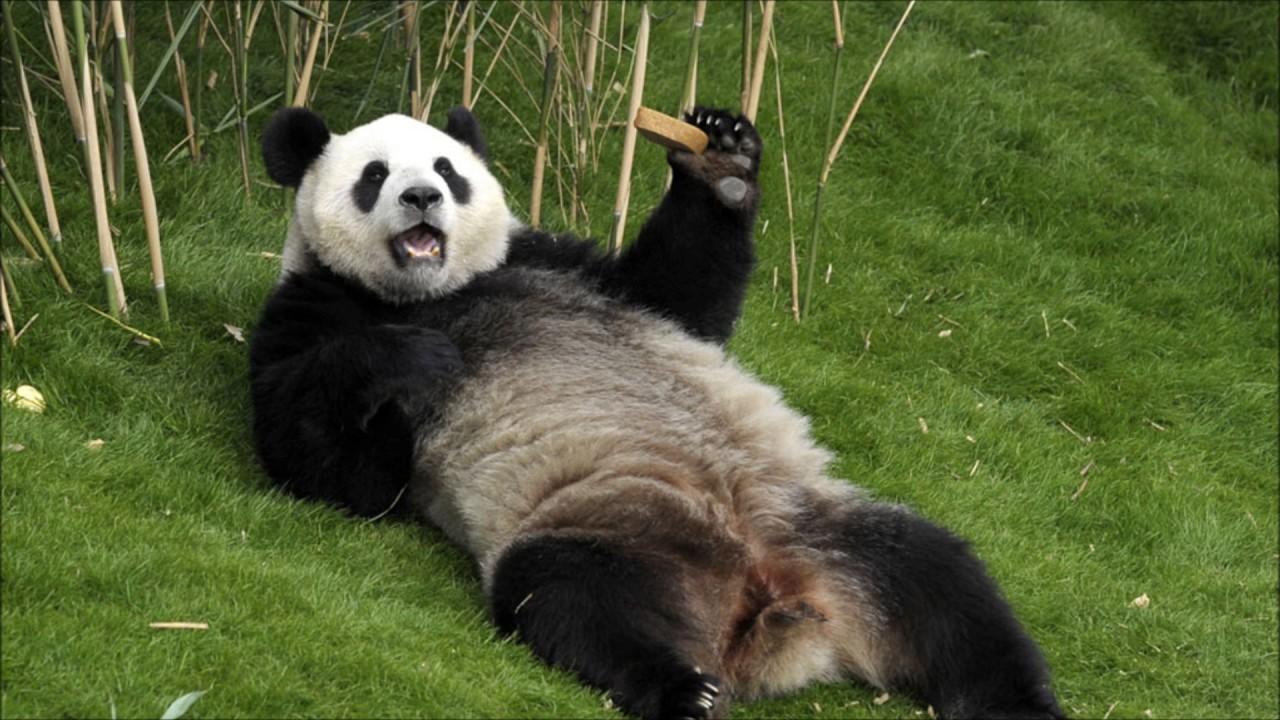 A legjobb vicces állatok a világ minden tájáról - YouTube 1337287612