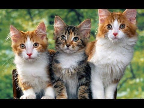 Приколы с котами 2016