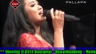 Gambar cover Seujung Kuku Anisa R New Pallapa Live Mojo Tengah Kedamean November 2016