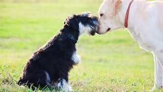 Training Your Dog With A Training Collar And Leash