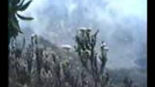 Forts.RUWENZORI-Märchenwelt-03+afrik.Traum-MUSIK 1991/92-12