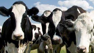 Fattoria il Palagiaccio latte e formaggi dal Mugello