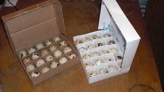 Упаковка для перепелиных яиц своими руками.(Сделать упаковку для яиц не сложно были бы желание и материалы. Ссылка на плейлист