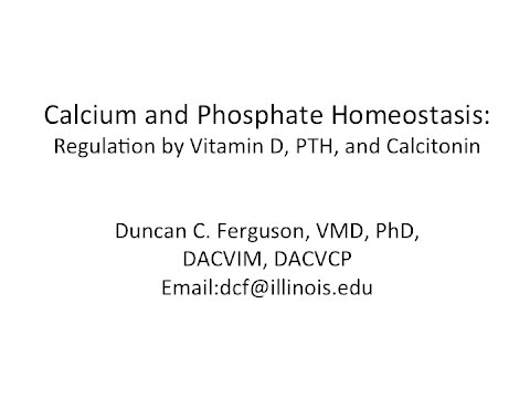 Calcium Physiology: Regulation by Vitamin D, PTH and Calcitonin