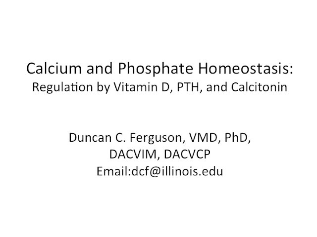 Calcium Physiology Regulation By Vitamin D Pth And Calcitonin Youtube