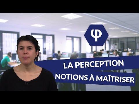 La perception : les notions à maîtriser - Philosophie - digiSchool