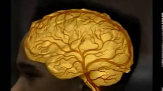 Cocaine and the Brain, The Holman Archives Video, Radiology Department