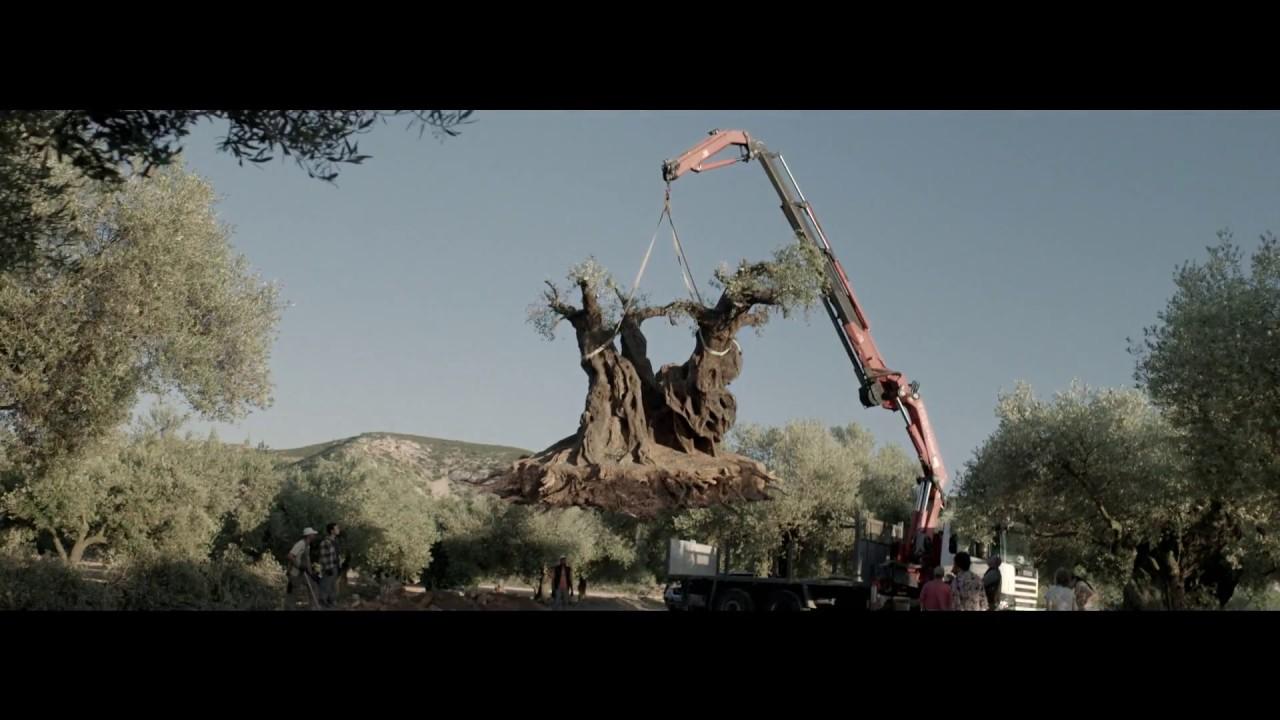 護樹電影【再見橄欖樹】感人上架 - YouTube