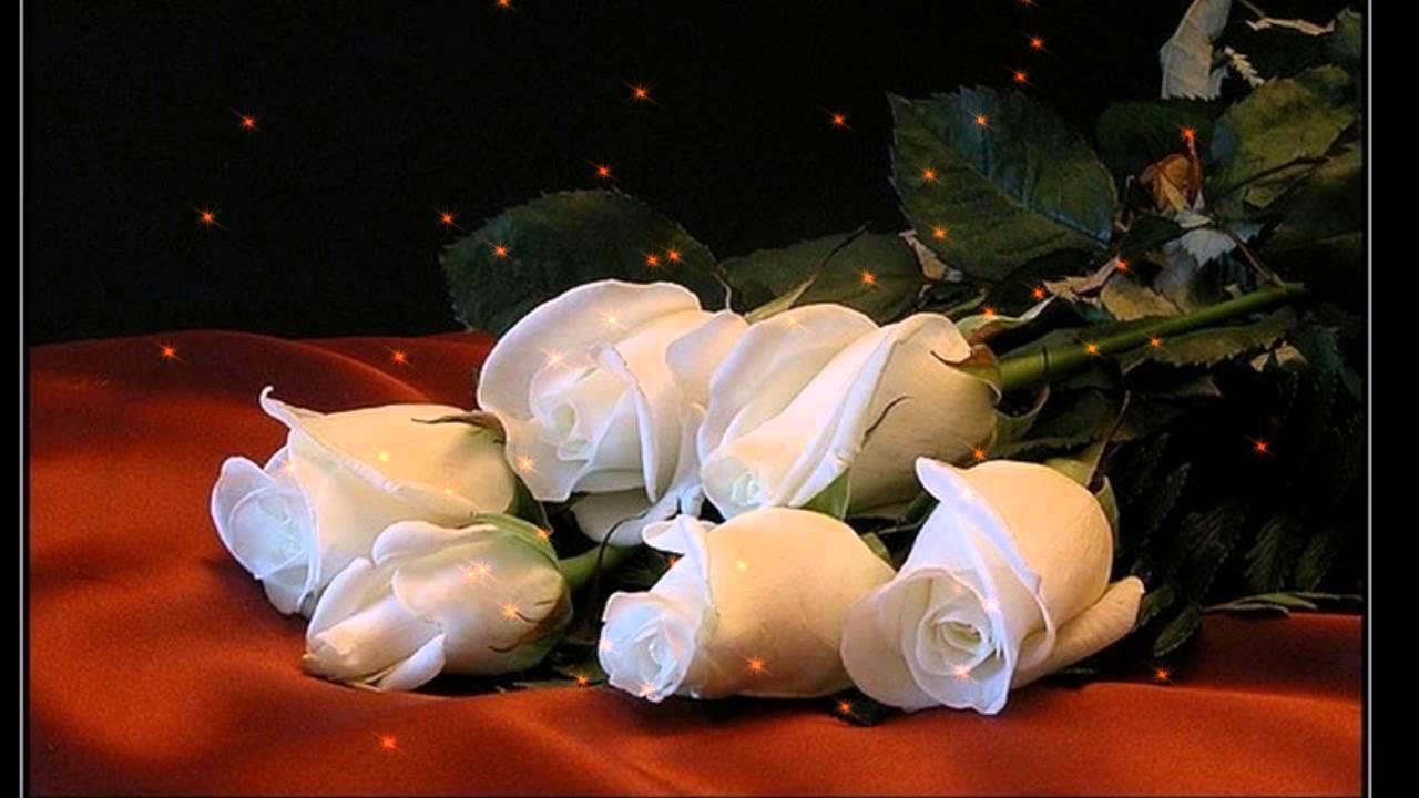 Картинки белые розы спокойной ночи