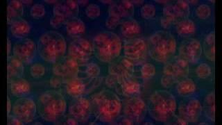 DMC - Merr Msim (Diss Noizy)
