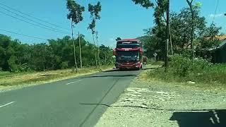 Heboh sopir baik hati meperhentikan  busnya karna kasihan pada  anak bis mania