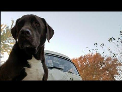 (LIVE) Type 2 Vlog Saturday 4/7/18  Ranger Dog Update!