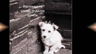 Грустная история про Собаку.До слёз 😭😭😢😢