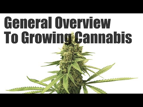 Complete General Overview To Growing Cannabis