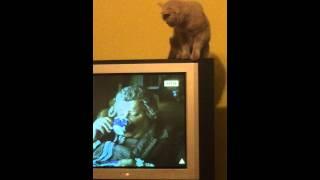 Кошка смотрит телевизор)))