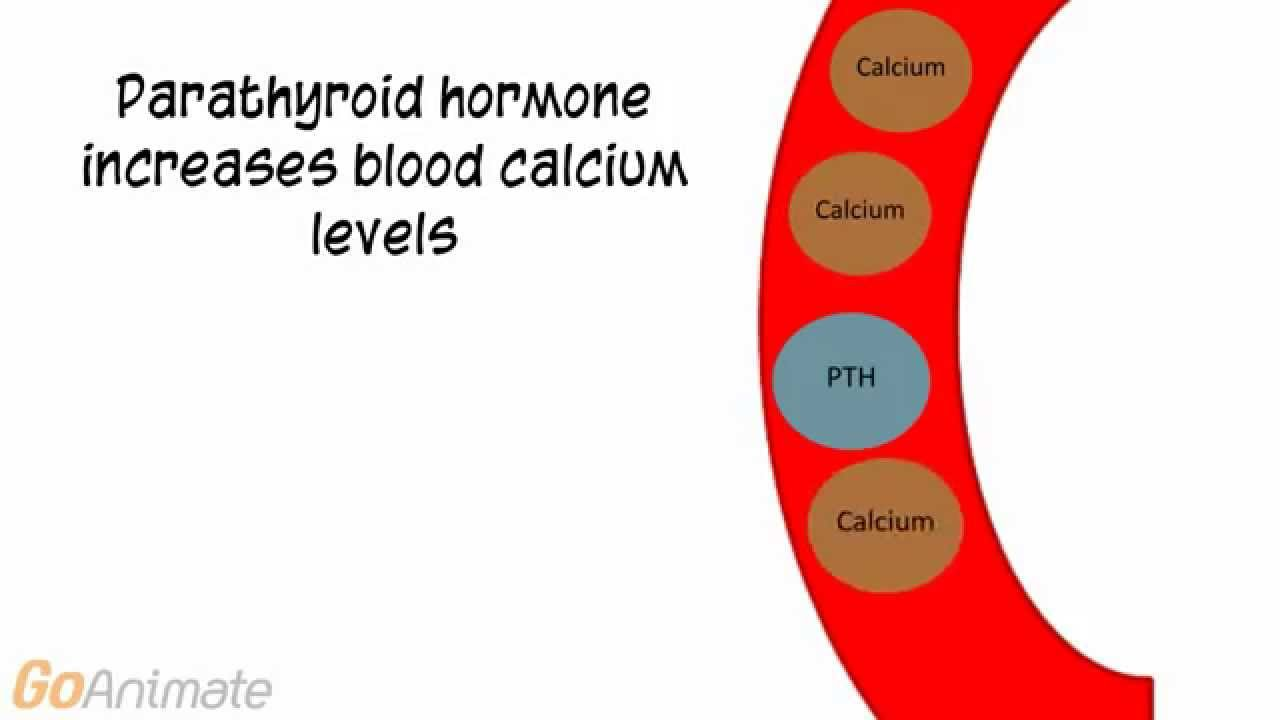 Anatomy and Physiology: Endocrine System: Calcitonin and PTH (v2.0 ...
