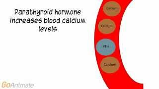 Anatomy and Physiology: Endocrine System: Calcitonin and PTH (v2.0)