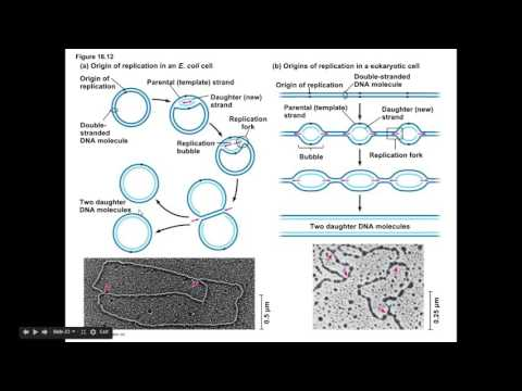 Molecular Biology Review Video