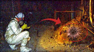 12 Most Mysterious Finds That Scientists Still Can't Explain