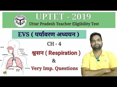 UPTET-2019 EVS ( पर्यावरण अध्ययन ) Ch - 4 श्वसन  और महत्वपूर्ण प्रश्न     संपूर्ण Syllabus के साथ