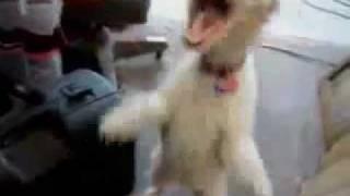 perro loco risitas