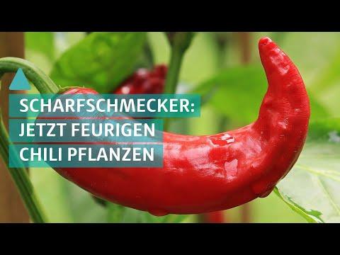 Garten freu(n)de - Feurigen Chili selbst anpflanzen