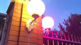Французские бульдоги в вечернем видео