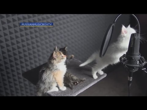 Countdown to Caturday: Singing Cats