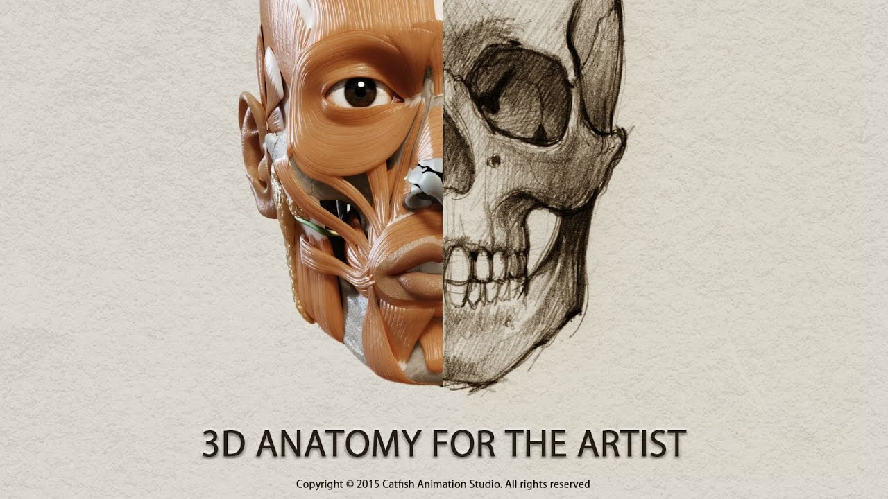 3D Anatomy for the Artist - App Tutorial - YouTube
