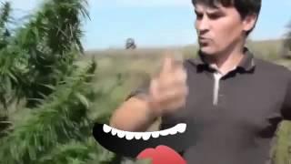 ПРИКОЛЫ ПРО яценюка петра порошенка и УКРАИНУ