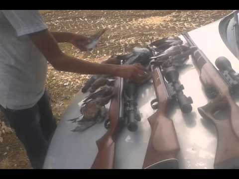 diana air rifle hunting in tunisia