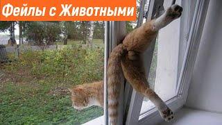 Неуклюжие Животные / У Животных не Получилось / Фейлы с Животными