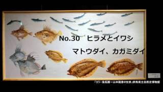 山本龍香のカラー魚拓個展のご案内2017年8月毎週末ホテル紫雲閣で開催します 2015年1月に開催した群馬県博での個展スライドショー thumbnail