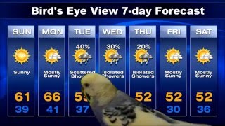 Angry Bird - Bird