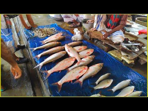 Village River Fish Market During Pandemic   Village Culture