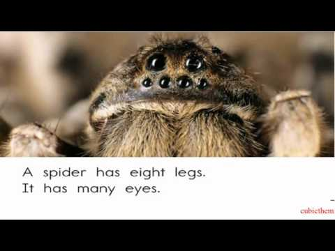 Fun English Stories Level C( Lesson 3: Spider)