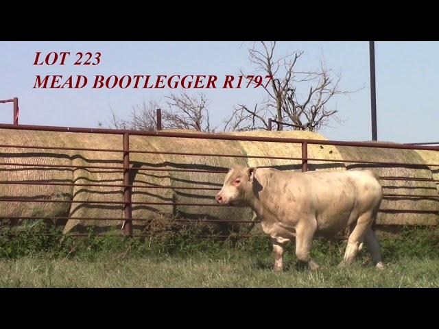 Mead Angus Lot 223