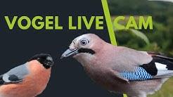 Vogel Live Cam - Eichelhäher, Gimpel, Buchfink, Meise & Co. aus direkter Nähe