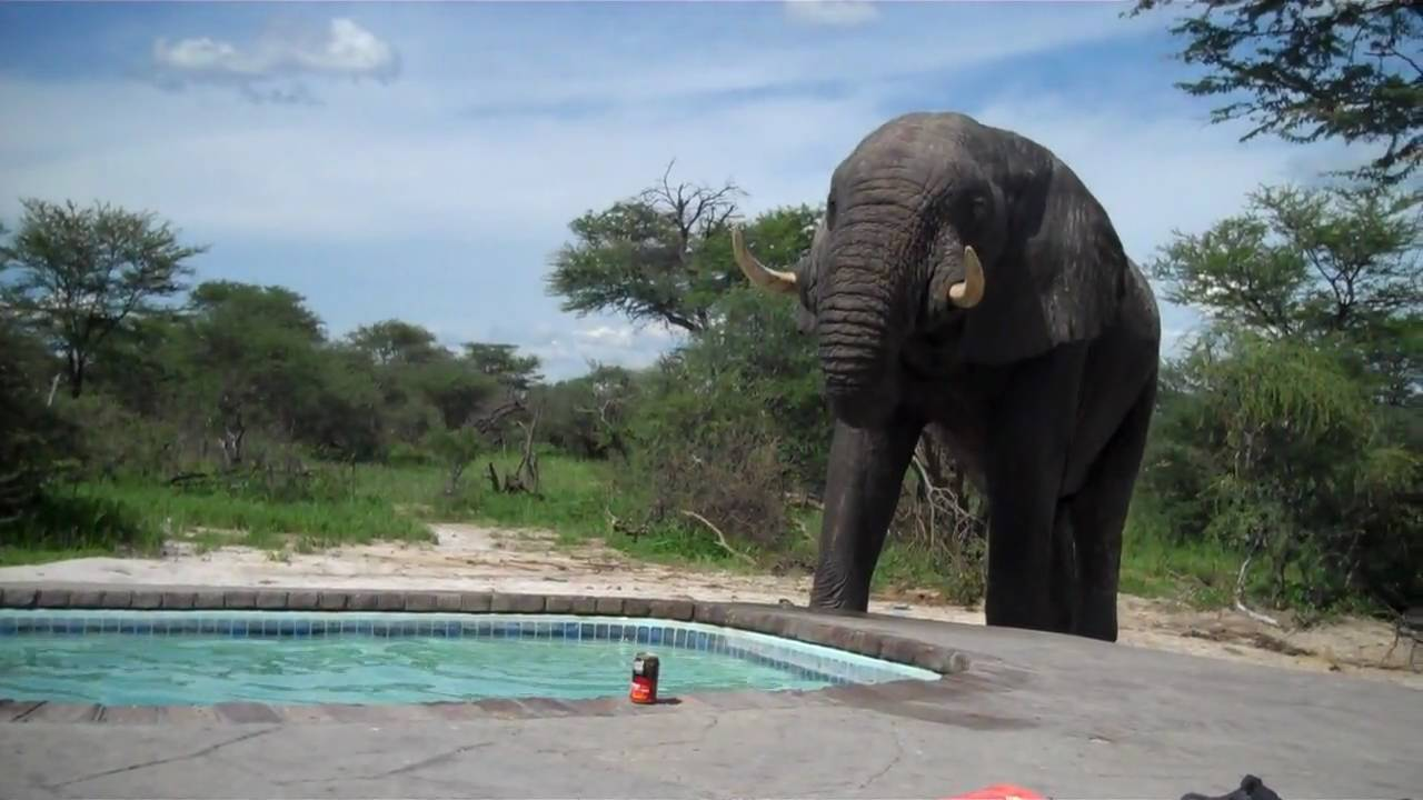 Cover Elephant Pool Safety