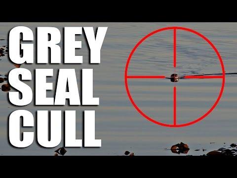 Grey Seal Cull