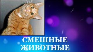 Смешные животные. Смотреть про кошек смешно