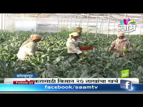 Success story of farming of Exotic vegetables