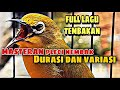 Masteran Pleci Nembak Durasi Dan Variasi Full Lagu Tembakan  Mp3 - Mp4 Download