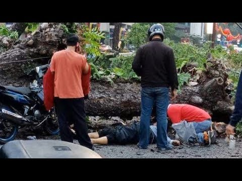 Man who crashed into uprooted tree near KLCC, dies