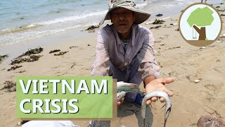 Vietnam Mass Fish Death - Ecological Crisis