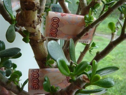 Денежное дерево!Денежный Фен-шуй)Долларовое дерево!Мужское и Женское счастье!